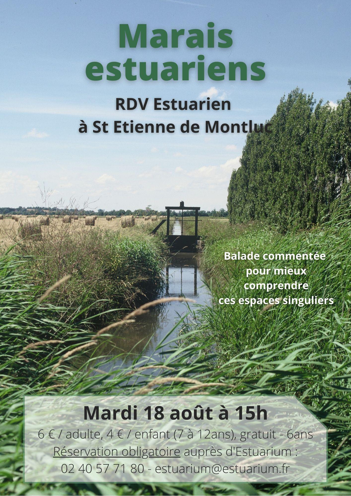 RDV Estuarien aout 2020 - Marais estuariens - ST ETIENNE